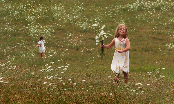 Amesbury: Abigail Doyle, 4, runs back to the car carrying a bouquet of Queen Anne's lace as her sister, Trinity, 7, picks more for their mother. They were at Woodsom Farm on Tuesday afternoon with their dad, John. Bryan Eaton/Staff Photo