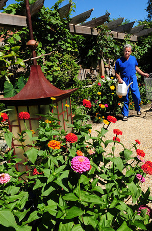 Newburyport: Dr. Charles Nicou has his hands fill watering the different gardens he tends at his Harris Street dental office, the Jeanne Geiger Crisis Center and the Greek Orthodox Church Annunciation across the street. The harder garden care for is one at the rail trail as he has to fill several large tubs with water to take there with his truck. Bryan Eaton/Staff Photo