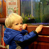 Newburyport: James Armstrong, 1, of Newburyport, watches the fishes in the childrens room at the Newburyport Public Library Monday afternoon. Photo by Ben Laing/Staff Photo