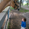 Newbury: Jack Tramontana. 2, of Newburyport says hello Schooner at the Spencer-Peirce-Little Farm in Newbury Sunday. Jack and his family were at the farm for the 15th annual Draft Horse Plow Day. Jim Vaiknoras/Staff photo