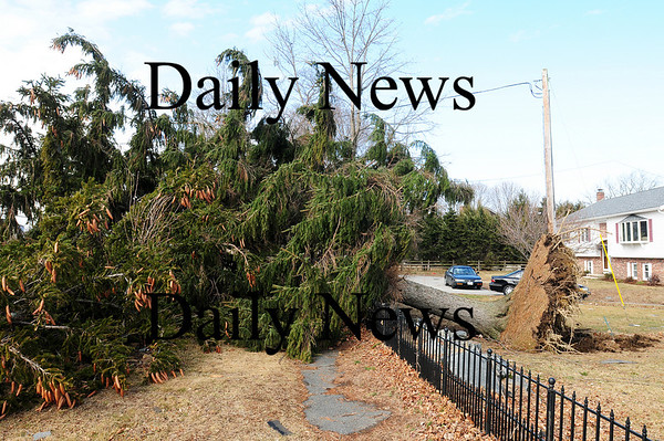 Newbury: A large pine tree fell across the sidewalk and into High Road during last night's storm.  Photo by Ben Laing/Staff Photo