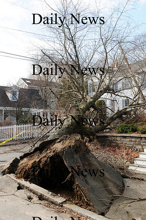 Newburyport: A large tree on the corner of State Street and Central Place blew over during last nights storm, tearing up a large section of sidewalk. Photo by Ben Laing/Staff Photo