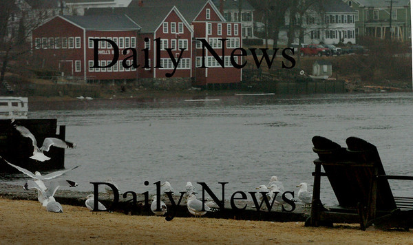 Amesbury: A flock of seagulls hunker down on this wall along the Merrimack River in Amesbury during a heavy downpour yesterday afternoon. Bryan Eaton/Staff Photo