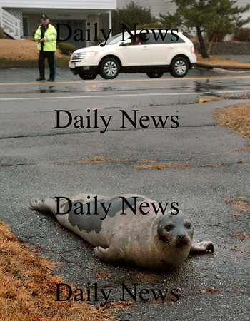 Salisbury: Salisbury police officer Michael Alder keeps his eye on a seal off North End Boulevard yesterday as the mammal slowly moves back to the marsh during high tide. The seal was in the middle of the road for a good half hour refusing to budge as Alder and Sgt. Kevin Sullivan blocked part of the road to traffic for the animal's safety. Bryan Eaton/Staff Photo