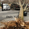 Newburyport: An uprooted tree fell on three cars on School Street in Newburyport also blocking the street. Bryan Eaton/Staff Photo