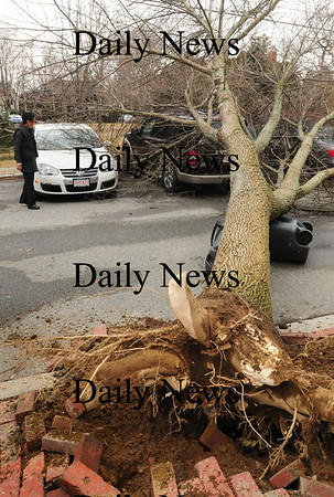 Newburyport: An uprooted tree fell on three cars on School Street in Newburyport also blocking the street. Bryan Eaton/Staff Photo