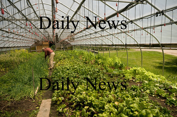 Newburyport: Dick Chase check his crops at the Arrowhead Farm in Newburyport last Summer. With Spring just around the corner local CSAs will soon have fresh produce to distribute. Jim Vaiknoras/Staff photo
