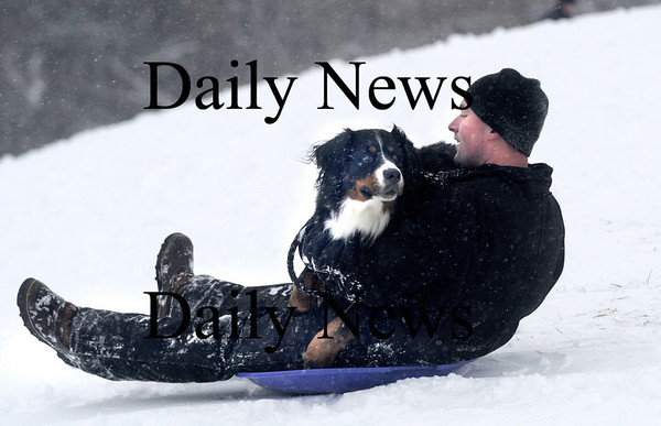 Amesbury: Piper gets a ride with her owner Kyle Jameson of Kingston Saturday afternoon as they sled at Woodsom Farm in Amesbury. Piper is a Bernese Mountain Dog , a breed that loves the cold and snow. jim Vaiknoras/Staff photo