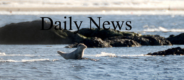 newbury: A young seal suns itself on an out cropping of rock near the mouth of the Merrimack River. Jim Vaiknoras/Staff photo