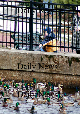 Amesbury: Cole Lintner, 3, of Amesbury, feeds the ducks along the Powow River at the Upper Millyard Tuesday afternoon while on a walk with his mom. Photo by Ben Laing/Staff Photo