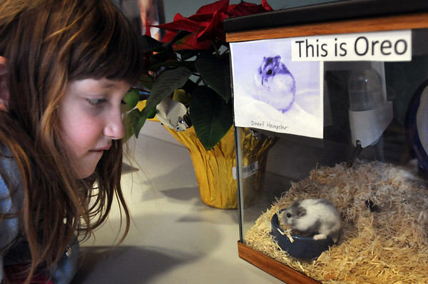Salisbury: Stacey Krafton, 6, peeks in on her class's pet hampster, Oreo, in Jane Keeler's kindergarten class at Salisbury Elementary School on Tuesday morning. Children take turns caring for the pet and Stacey hopes to get a couple hampsters of her own. Bryan Eaton/Staff Photo