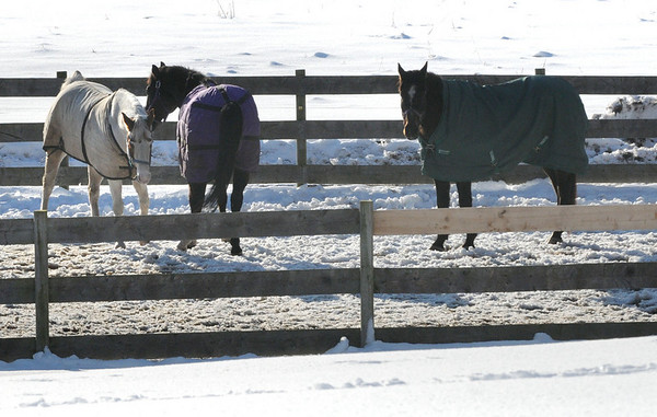 Newbury: Three horses spend time at Oak Valley Farm on High Road in Newbury with blanket coverings, though yesterday's temperature hit the high 30's. Bryan Eaton/Staff Photo