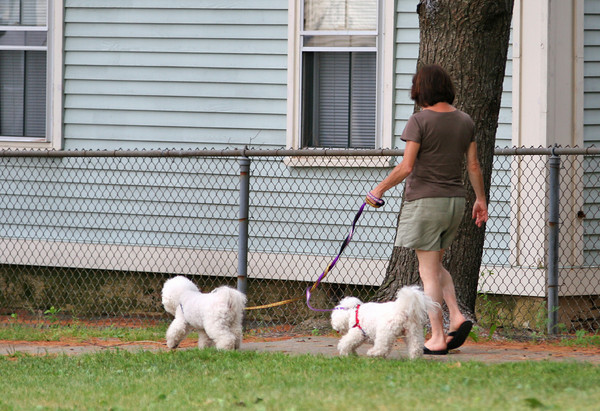 Newburyport: A pair of dogs are lead through Atwood Park in Newburyport Tuesday afternoon. The City has been debating whether or not to raise the fines imposed on dog owners that do not clean up after their pets. Photo by Ben Laing/Staff Photo