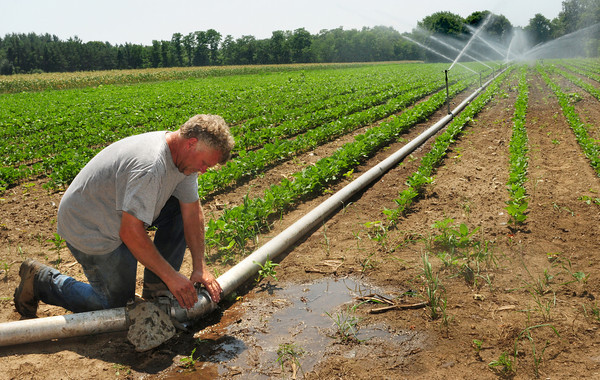 Salisbury: Rob Bartlett of Bartlett's Farm in Salisbury uses pond water, which is getting low, to irrigate this green been and corn field while he's had his eye on the weather forecast which is predicting some rain Saturday night. Despite the dry conditions, he's expecting to be selling corn this weekend at the farmstand which is a day or two ahead of past average dates. Bryan Eaton Staff Photo