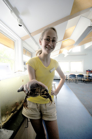 Newburyport: Volunteer Katie Royce holds a rock crab at the Joppa Flats Education Center in Newburyport Wednesday.  The center has drop in hours were kids can learn about marine life. Jim Vaiknoras/Staff photo