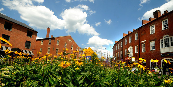 Newburyport: Black-eyed Susans dominate the corner of State and Merrimack Streets at Market Square in Downtown Newburyport. Jim Vaiknoras/Staff photo
