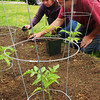 Newburyport: Bresnahan School custodian Steve Boulay, who's helping to coordinate the planting project with Opportunity Works, helps Grace Sullivan as they plant pepper plants. Bryan Eaton/Staff Photo