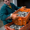 Newburyport: Peter Kimball stacks tubs of clams from Weymouth off a delivery truck at the purification plant at Plum Island Point. Bryan Eaton/Staff Photo