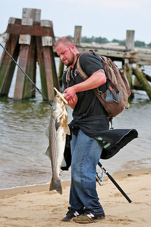 Newburyport: Toby Bastille of Nashua, NH reels in a 36 inch stripped bass at Plum Island point Tuesday afternoon. It was the third stripper he had caught and released that day. Photo by Ben Laing/Staff Photo