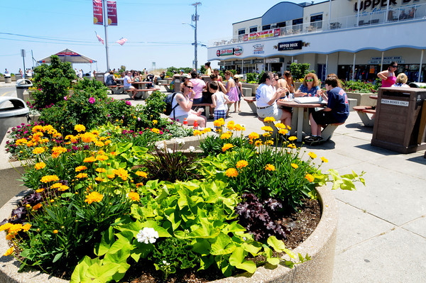 Salisbury: Flowers bloom at the beach center as Salisbury prepares for this weekends Sand and Sea Festival. JIm Vaiknoras/Staff photo