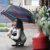 Newburyport: Olivia Miller, 7, of Newburyport uses  an umbrella in the light rain Sunday morning on State Street in Newburyport. Jim Vaiknoras/Staff photo