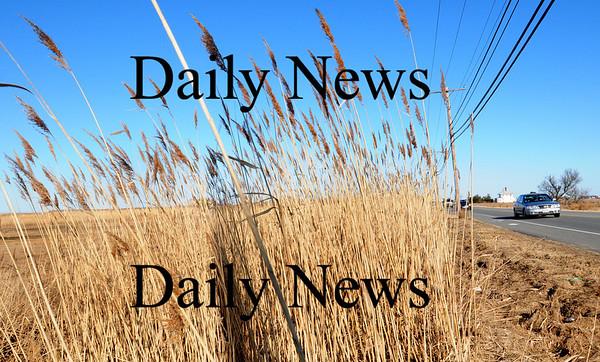 Newbury: Some of the stands of phragmites along Plum Island Turnpike will be burned. Bryan Eaton/Staff Photo