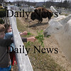 Newbury: Ian, 7,  and Kate, 4,  Keller of Newburyport feed carrot greens to Salt the llama at the Tendercrop Farm in Newbury Sunday afternoon. Jim Vaiknoras/Staff photo