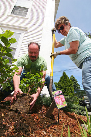 Salisbury: Doug Morris and Claudette Novak of the Sea Spray Garden Club help plant pink hydrangea outside the Salisbury Town Hall on Monday afternoon. Photo by Ben Laing/Staff Photo