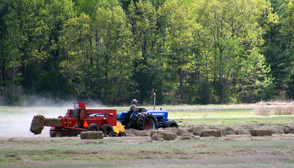 Newbury: Salt hay is gathered in the marsh off of Hay Street in Newbury Monday afternoon. Photo by Ben Laing/Staff Photo