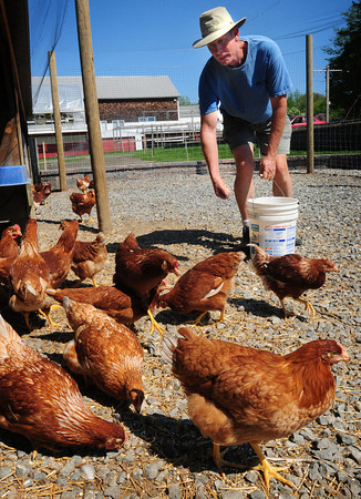 Amesbury: Glenn Cook of Cider Hill Farm in Amesbury has increased his flock of laying hens this year for extra eggs needed for the farm's new Community Supported Agriculture program. Bryan Eaton/Staff Photo