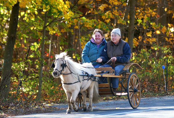 Newbury: The brisk fall weather was the perfect setting for a mini horse and buggy cruise down High Road in Newbury Monday morning. Photo by Ben Laing/Staff Photo