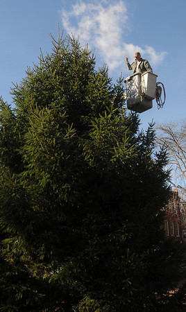 Newburyport: Calvin Eaton of the Newburyport DPW, strings lights around the Market Square Christmas Treet in Newburyport. Jim Vaiknoras/Staff photo