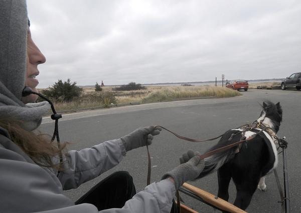 Newbury:Ellen Scoffeld drives a cart at Salisbury Beach pulled by Mini Me a mini horse Sunday morning. Jim Vaiknoras/Staff photo