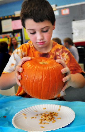 Amesbury: Ian Manning, 7, shakes seeds out of his pumpkin after scooping as much out as he could with his hand. The first-graders in Pauline Fitzgerald's class at Amesbury Elementary were using the pumpkins to learn about math by measuring them and counting how many seeds they got from each one. Bryan Eaton/Staff Photo