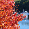 Amesbury: A boater motors along the Merrimack River near Hatter's Point in Amesbury on Wednesday morning as local foliage begins to approach peak colors. Bryan Eaton/Staff Photo