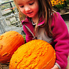 Newbury: Olivia Wilson, 3, of Newburyport checks out one of the bumpy pumpkins at Tendercrop Farm in Newbury before deciding on getting a traditional smooth-skinned one. She was there with her mother, Joanne, and brothers Zach, 7, and Hayden, 5. Bryan Eaton/Staff Photo