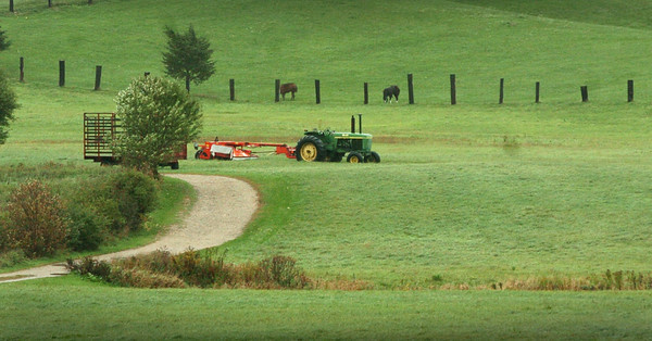 Amesbury: The fields at Woodsom Farm in Amesbury are often busy with people walking their dogs, but not so during yesterday's wind and rain. Bryan Eaton/Staff Photo