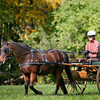 Newburyport: A horse and buggy trot around the grounds at Maudsaly State Park in Newburyport Monday afternoon. Photo by Ben Laing/Staff Photo