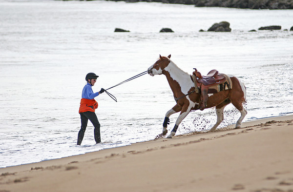 Salisbury: A woman tries to coax her horse into the water at Salsibury Beach Reservation Sunday morning. Photo by Ben Laing/Staff Photo