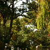 Salisbury: Long Hill Cemetery in Salisbury. Photo by Ben Laing/Staff Photo