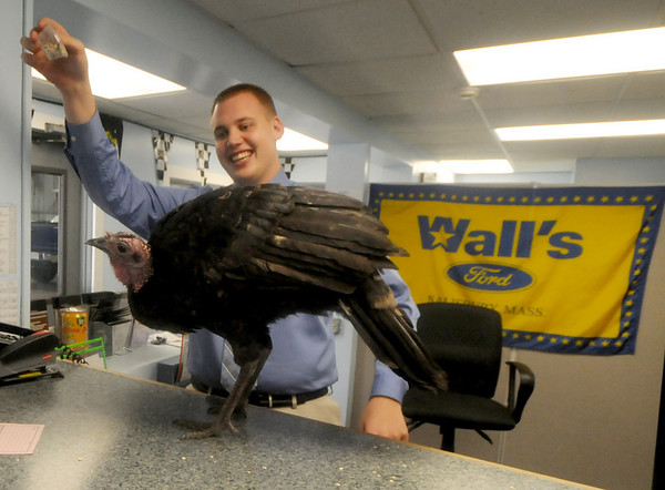 Salisbury: Assistant manager John Wall of Wall Ford in Salisbury feeds a turkey in the maintainance dept. The bird that has adopted the dealership as it's home. Jim Vaiknoras/Staff photo