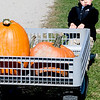 Amesbury: Andrew McManus, 2, of Newbury pulls a cart full of pumpkins while shopping with his mom at Cider Hill Farm in Amesbury Sunday morning. Jim Vaiknoras/Staff photo