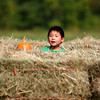Newbury: Henry Lacey, 7, of Newburyport, pokes head out of a maze of hay bales at the Fall Harvest Festival at the Spencer Pierce-Little Farm in  Newbury on Saturday. Photo by Ben Laing/Staff Photo