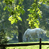 Rowley: A horse keeps in the shade while grazing along Dodge Road in Rowley on Thursday afternoon. Bryan Eaton/Staff Photo