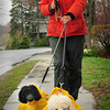 Amesbury: Lauren Poetz and her dogs Louis, left, and Otto are all proctected from the rain while taking a walk along Main Street on Point Shore in Amesbury yesterday afternoon. Showers continue today with clearing on Thursday. Bryan Eaton/Staff Photo