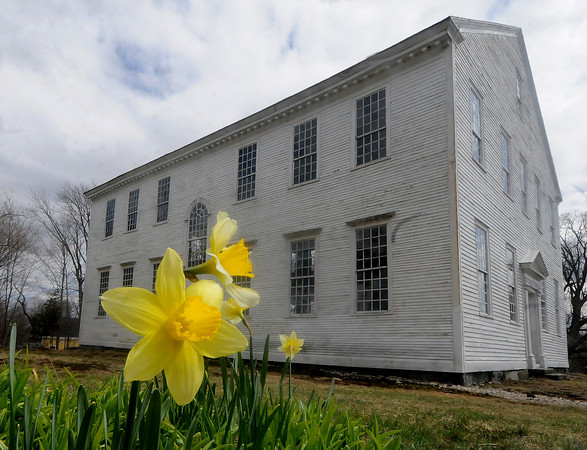 Amesbury: Daffodils bloom at the Rocky Hill Meeting House in Amesbury. Jim Vaiknoras/Staff photo