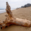 Newbury: Several large pieces of driftwood, washed up by recent storms litter the beach on Plum Island. Jim Vaiknoras/Staff photo