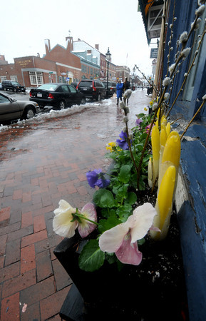 Newburyport: Spring flowers, wet with snow, grow in window boxes outside the Rock Fish on State Street in Newburyport. Jim Vaiknoras/Staff photo