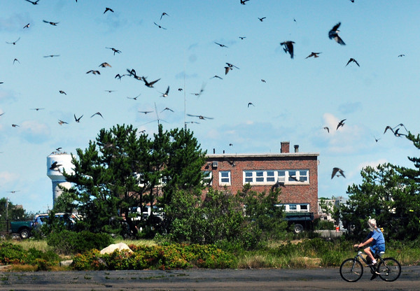 """Salisbury: Like a scene from the Alfred Hitchcock film """"The Birds"""" swallows fly around in huge numbers at Salisbury Beach State Reservation on Tuesday. Bryan Eaton/Staff Photo"""