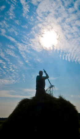 Newbury: Jack Jackman moves hay from on top of a stack as the Essex County Sportman's Association replenishes the stacks on their land off Rt 1 along the Parker River Sunday morning. Jackman helped organize the effort to rebuild teh iconic stacks. Jim Vaiknoras/Staff photo